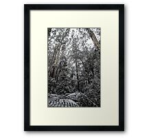 Forest of White Framed Print