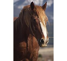 Tatanka Spirit looks on Photographic Print