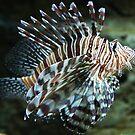Lionfish, Atlanta Aquarium by Jane McDougall