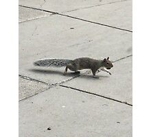 Squirrel - Rat with a fancy tail Photographic Print