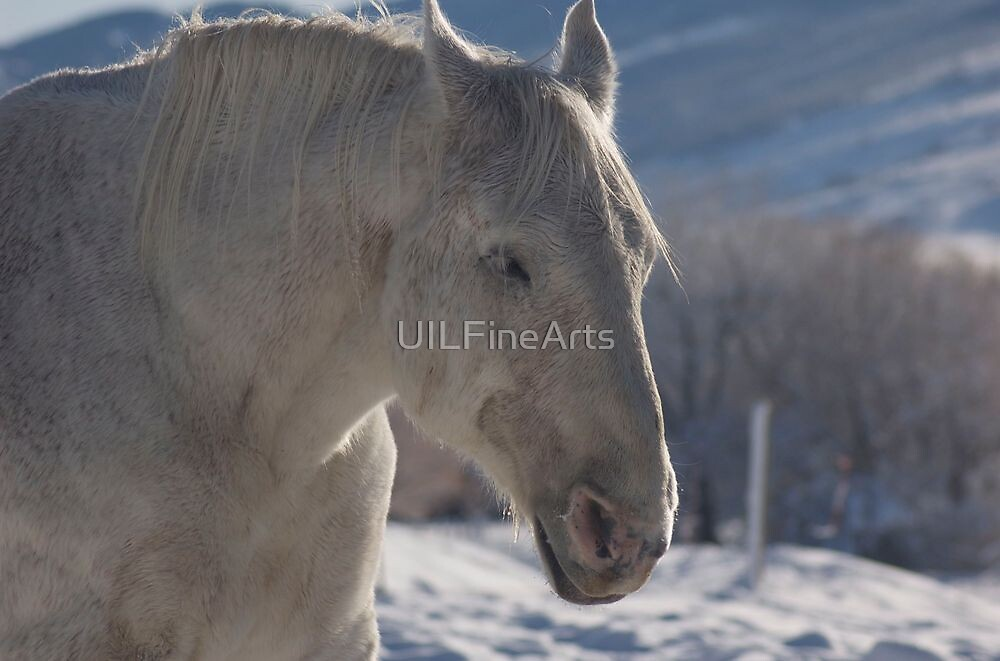 Blue Ice by UILFineArts