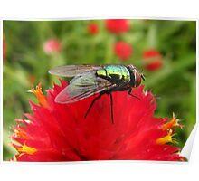 Flies Like Flowers Too! Poster