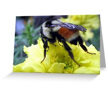 Bumblebee Kisses Greeting Card