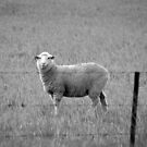 Grass Is Greener by Natalie Ord