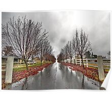 Tree-Lined Driveway, Loomis, CA Poster