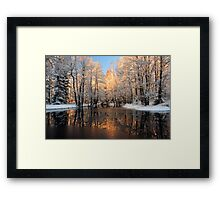 Reflection trees with sunlight Framed Print