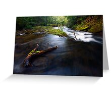 Stream in woods Greeting Card