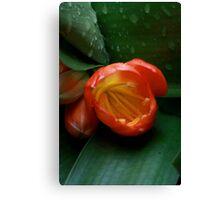 Macro flower 2 Canvas Print
