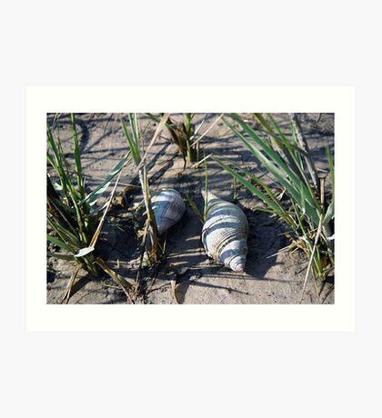 Seashells by the Gulf of Mexico Art Print