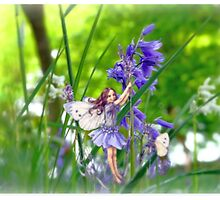 The Bluebell Fairy by Morag Bates