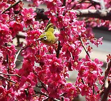 Small Yellow Bird In A Tree by imaraccoon