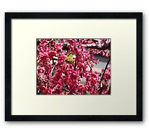 Small Yellow Bird In A Tree Framed Print