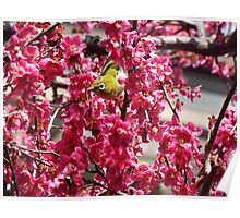 Small Yellow Bird In A Tree Poster