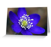 Blue buttercup Greeting Card