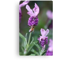 Bee Lavender Canvas Print