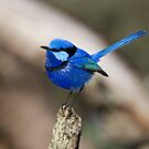 A Little Blue Bird by inAWE