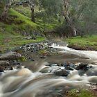 Robertson's Creek (2) by Bronwyn Munro