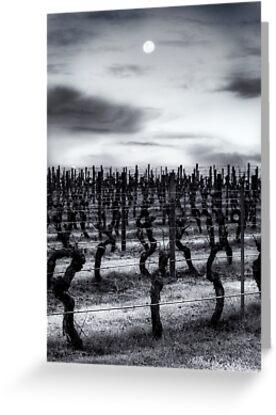 Vineyard Moon by Ben Reynolds