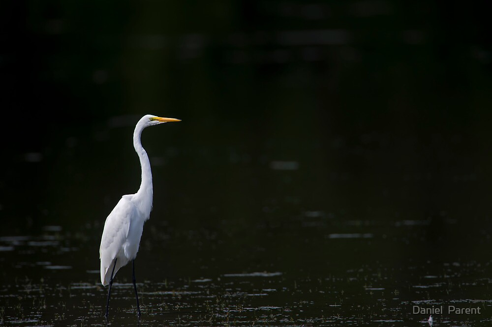 Egret by Daniel  Parent
