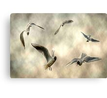 Black Headed Gull Aerial Collage Canvas Print