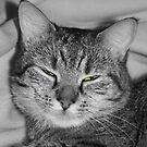 pheobe the lazy cat by markbailey74