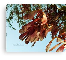 Fly Away. Canvas Print