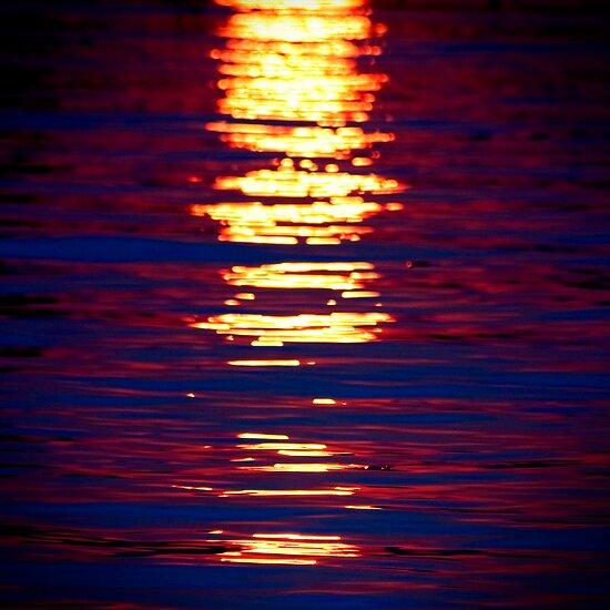 Sunshine On Linyanti by Damienne Bingham