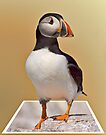 The Puffin by David Lewins