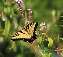 Swallowtail in the Garden by Lisa G. Putman