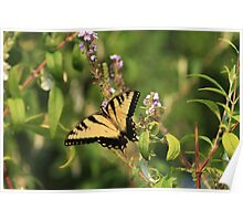 Swallowtail in the Garden Poster