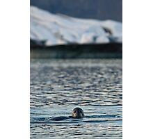 Seal at Glacier Lagoon Photographic Print
