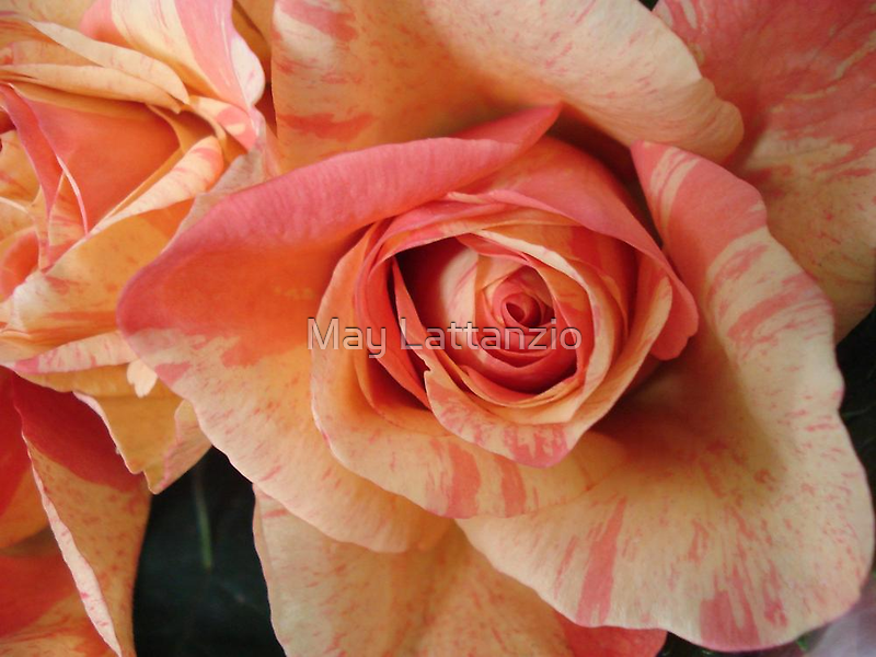 COLOR SPLASH ROSES by May Lattanzio