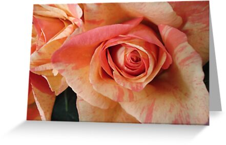 COLOR SPLASH ROSES by May Lattanzio