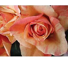 COLOR SPLASH ROSES Photographic Print