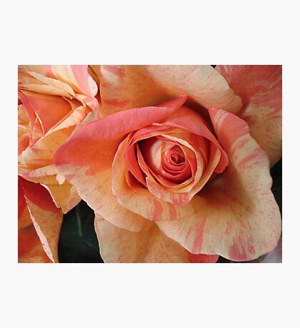 COLOR SPLASH ROSES Photographic Print