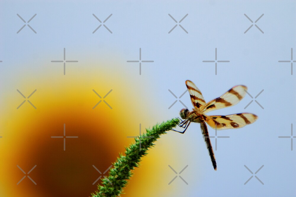 Dragonfly in the Sky by Lisa G. Putman