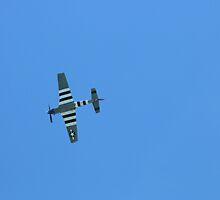 WW II Plane by Laurie Puglia