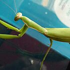 Preying Mantis by Laurie Puglia