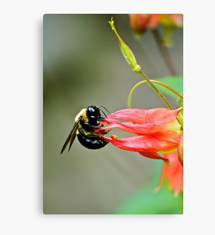 Bee... Canvas Print