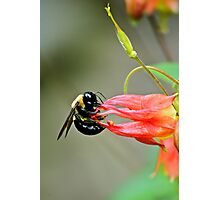 Bee... Photographic Print