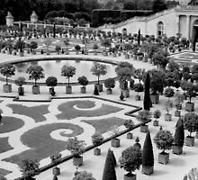 Versi garden by texasgirl