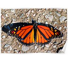Monarch Butterfly from Bon Echo Poster