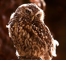 Little Owl by Simon Marsden