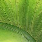 Green Leaf by CarolM
