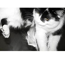 Cats and Mirrors Photographic Print