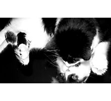 Cat's Narcissism 1 Photographic Print