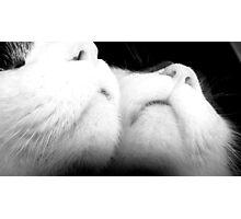 Cat's Narcissism 4 Photographic Print