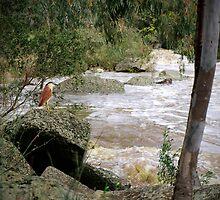 On Flood Watch by Cathy  Walker