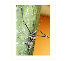 Harlequin Long-Horned Beetle (Acrocinus longimanus) - Costa Rica Art Print
