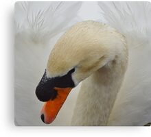 feathered beauty of the swan Canvas Print